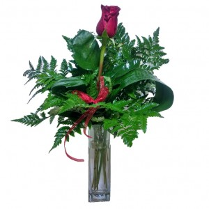 One Single Red Rose in Vase